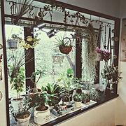 セリア/観葉植物/DIY/アイアン/マクラメハンギング/エアプランツ…などのインテリア実例