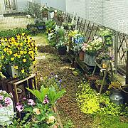 みどりの小動物が潜む庭/伸縮ラティス/ナチュラルガーデン/Entrance…などのインテリア実例