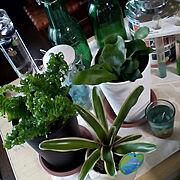 いつもいいね!ありがとうございます♪/ナフコ/観葉植物/ニトリ/ダイソー/NO GREEN NO LIFE…などのインテリア実例