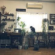 NOYES/ウォールナット無垢材/fine little day/ムートンラグ…などに関連する他の写真