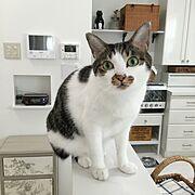 連投すみません/猫のいる日常/やっぱり猫が好き/タフ猫同盟/ダイニング&キッチン/猫と暮らす。…などのインテリア実例