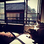 京町屋/カウチソファー/ソファ/Lounge…などのインテリア実例