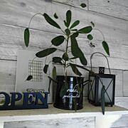 雑貨/ハンドメイド/DIY/日替わり投稿企画!木曜日/植物/観葉植物…などに関連する他の写真