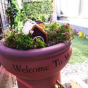 四種の植物のうち 一種枯れた..../まだ蕾がたくさん♡/ドッグラン用のお庭/お菓子の家…などのインテリア実例
