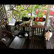 テーブルdiy/DIY初心者/保護猫/Room Clipとの出会いに感謝✳︎/ねこのいる日常…などのインテリア実例