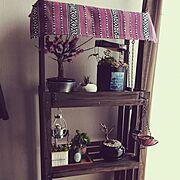 ダイソー/リメ缶/盆栽はじめました/観葉植物/植物/盆栽…などのインテリア実例