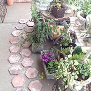アンティーク/植物/観葉植物/DIY/ハンドメイド/多肉植物…などのインテリア実例