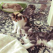癒されてもらえてますか?/ゆっくりな暮らし/仔猫成長の日々/Bedroom…などのインテリア実例