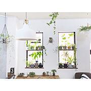 植物/素敵便/ツボ友♡/いいね&コメントいつもアリガトウ♡/雑貨大好き♡/フォローありがとうございます☆…などに関連する他の写真