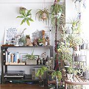 植物/観葉植物/男前/ドライフラワー/DIY/北欧…などのインテリア実例