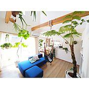 100均/観葉植物/ダイソー/セリア/DIY/初投稿…などに関連する他の写真