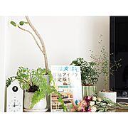 観葉植物の人気の写真