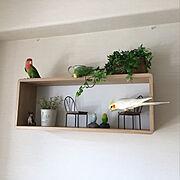 フェイクグリーン/とり雑貨/ダイソー/コザクラインコ/角が丸い設置簡単壁掛けボックス/鳥部…などのインテリア実例