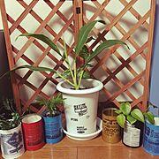 観葉植物/雑貨/リメ缶/DIY/カリフォルニアが好き/Lounge…などのインテリア実例
