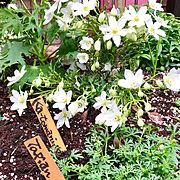 フリーハンド♡/ガーデニング/手作りのお庭♡/ヘイヘイホー部/木が好き…などに関連する他の写真