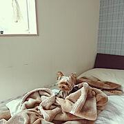 ウンベラータ/観葉植物/Bedroomに関連する他の写真