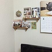 セリア/猫/My Shelf…などのインテリア実例