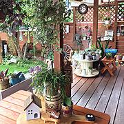 DIY/トィプードル/犬と暮らす/犬と暮らす家/リメ缶/観葉植物…などのインテリア実例