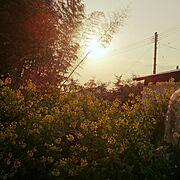 朝陽/菜の花/庭…などのインテリア実例