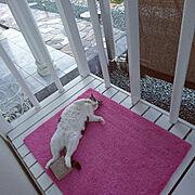 猫に、学び/玲音の特等席/Entrance…などのインテリア実例