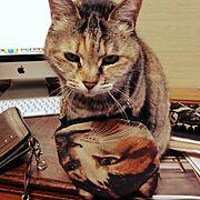 ムチャチャ/インテリアじゃないけど…(≧∇≦)/ねこのいる風景/My Desk…などのインテリア実例