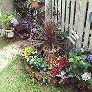 フラウヨシミ/アジサイ/紫御殿/マンションの庭/小径/小庭…などのインテリア実例