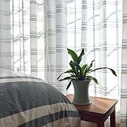 クッション/ウィリンキー/アンティーク/デコ窓/観葉植物/ヴィンテージ…などに関連する他の写真