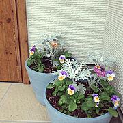 雑貨/庭の花/カインズ/Entrance…などのインテリア実例