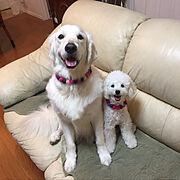 愛犬と暮らす/Lounge…などのインテリア実例