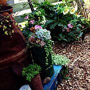 garden…などのインテリア実例