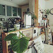 見せる収納/BROCCOLYN♡/ウンベラータ/エバーフレッシュ/GREENのある暮らし/Lounge…などのインテリア実例