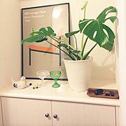 ポスター/Entrance/観葉植物/Iittala/マリボウル/ぽれぽれ動物…などのインテリア実例