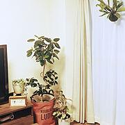 苔玉のインテリア実例写真