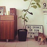 サインプレート/男前化計画/コンテスト用に♪/JUNK/ウンベラータ/NO GREEN NO LIFE…などのインテリア実例