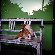 古い物/うちでもうちの猫でもない(*ノωノ)/ねこ部/猫/シャビーなベンチ/RC湘南LOVE♡…などのインテリア実例