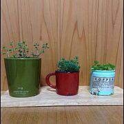 多肉植物/植物/リメ缶♥️/Lounge…などのインテリア実例