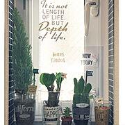 セリア/ダイソー/田舎暮らし/アンティーク/平屋/観葉植物…などに関連する他の写真