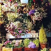 多肉 多肉植物 観葉植物 サボテン/コウモリラン/ベランダガーデニング/ガーデニング…などのインテリア実例