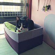 ペンキ/カラフル/DIY/多頭飼い/ねこと暮らす。/猫ベッドDIY…などのインテリア実例