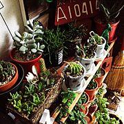 セリア/雑貨/多肉植物/My Shelf…などのインテリア実例