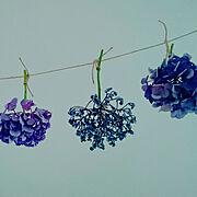 ドライに挑戦中/いつもいいねやコメありがとうございます♡/花のある暮らし/紫陽花…などのインテリア実例