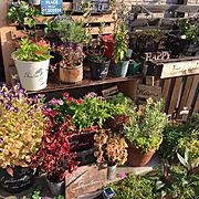 観葉植物/シンプル/雑貨/無印良品/IKEA/ドライフラワー…などに関連する他の写真