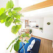 Entrance/シンプルナチュラル/シンプルな暮らし/室内窓/クルミ…などに関連する他の写真