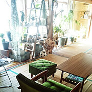 アガベ/CAUDEX/植物コーナー/定点観測/静岡県民/日本家屋…などのインテリア実例