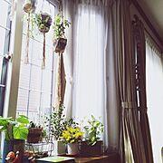 出窓/観葉植物/エニシダ/ベンジャミンバロック/ウンベラータ/ポトス…などのインテリア実例