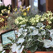 一輪挿し/ビニール花瓶/花のある暮らし/花器/フラワーベース/窓辺…などに関連する他の写真