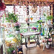 Bedroom/脚立棚/ハーブ/ハーブのある暮らし/植木鉢/花柄…などのインテリア実例