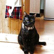 ペット/猫/Kitchen…などのインテリア実例