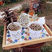 カフェトレイDIY/貝殻/多肉植物/レンガの小道/松ぼっくり/ジャンク…などのインテリア実例
