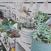 多肉植物に関連する他の写真